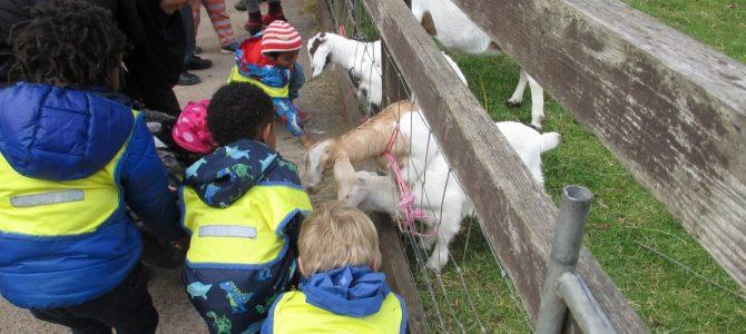 Green Room's Farm Visit