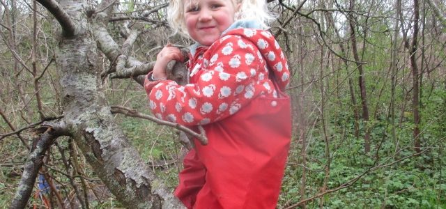 Yellow Room's Forest School Visit